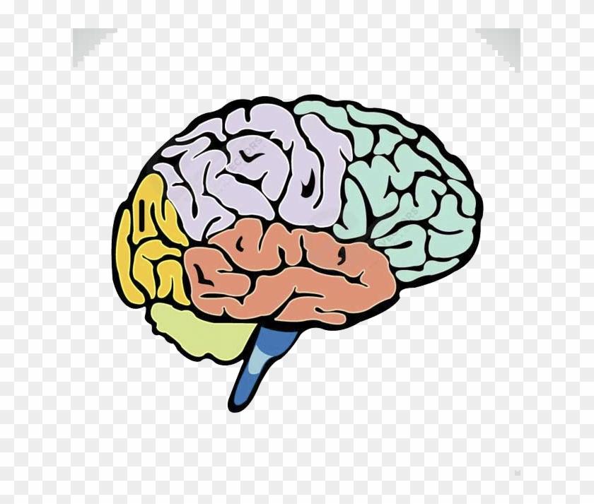 Lightbulb Clipart Human Brain.