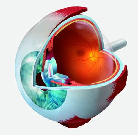 31 best images about Vision on Pinterest.