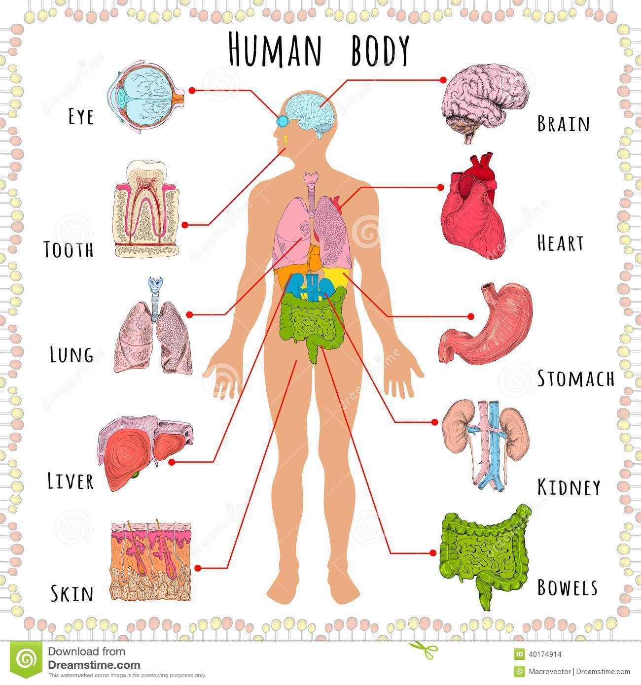 parts of the human body clipart - Clipground