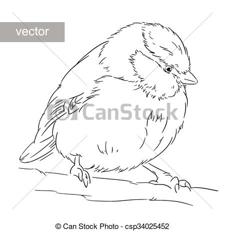 Clipart Vector of Blue Tit on a branch Parus caeruleus vector.