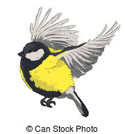 Parus Illustrations and Stock Art. 120 Parus illustration and.