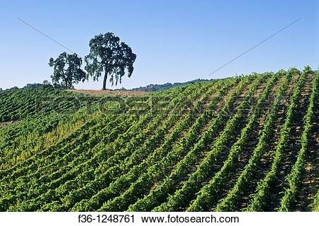 Stock Photography of Tablas Creek Vineyards, Adelaida Road, Paso.