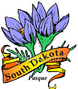 Flower of South Dakota, the Pasque Flower with a Gold South Dakota.