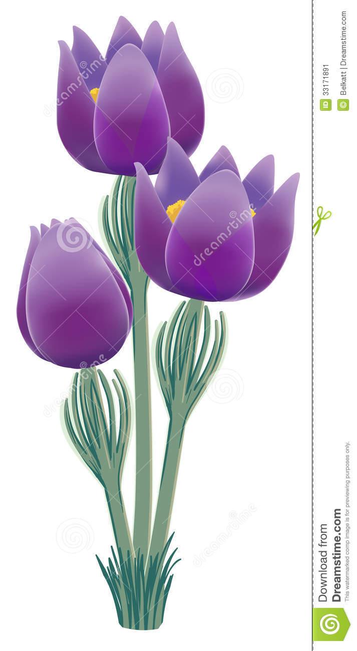 Pasque Flower, Bot.: Pulsatilla Vulgaris Stock Image.
