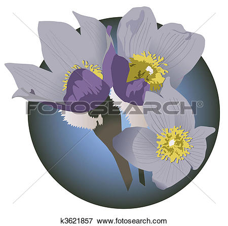Stock Illustration of Pasque FLower k3621857.