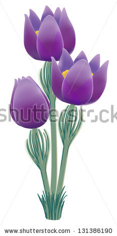 Pasque Flower Stock Vectors & Vector Clip Art.