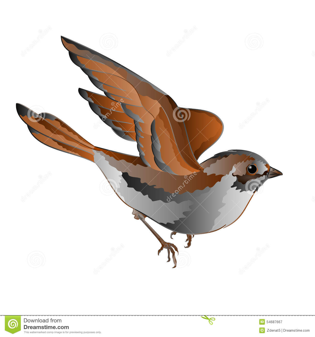 Passer Domesticus House Sparrow Stock Illustrations.