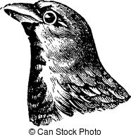 Passeridae Vector Clipart Illustrations. 11 Passeridae clip art.