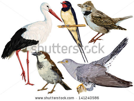 Passeridae Stock Photos, Royalty.