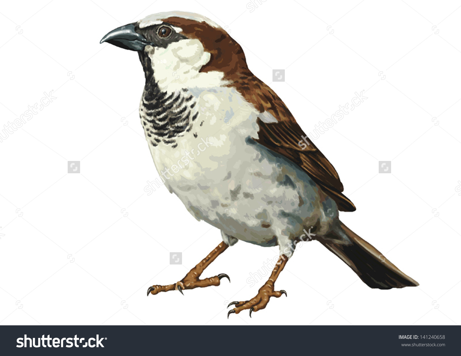 Color Vector Drawing Wild Common Bird Stock Vector 141240658.