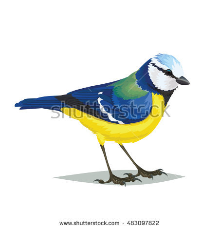 Small Passerine Birds Stock Photos, Royalty.