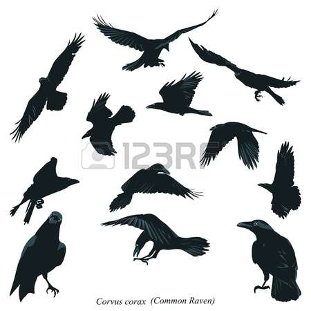 417 Passerine Bird Stock Illustrations, Cliparts And Royalty Free.