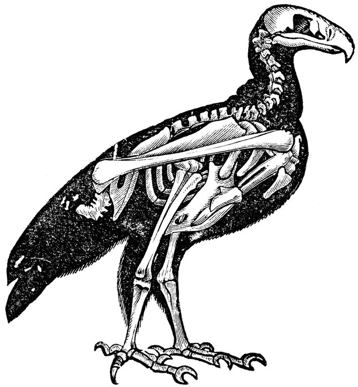 1000+ images about Bird Anatomy on Pinterest.