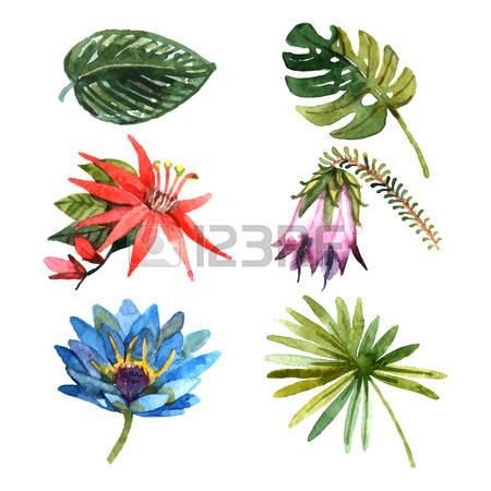 94 Passiflora Stock Illustrations, Cliparts And Royalty Free.