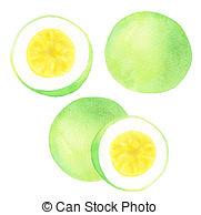 Passiflora edulis Clipart and Stock Illustrations. 18 Passiflora.
