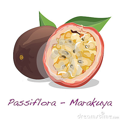 Passiflora Stock Illustrations.