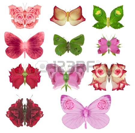 Passion Flower Butterfly Stock Photos & Pictures. Royalty Free.