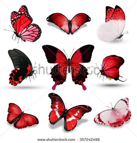 Passion Butterfly Stock Photos, Royalty.