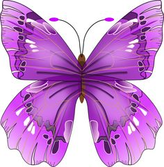 Butterfly's on Pinterest.