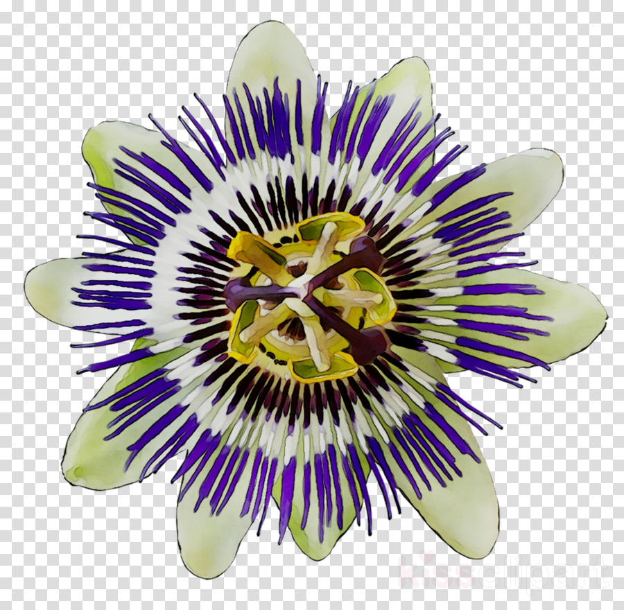 Flower Purple clipart.