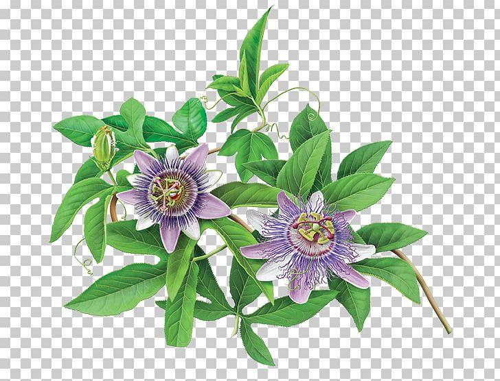Green Tea Organic Food Flowering Tea Purple Passionflower.