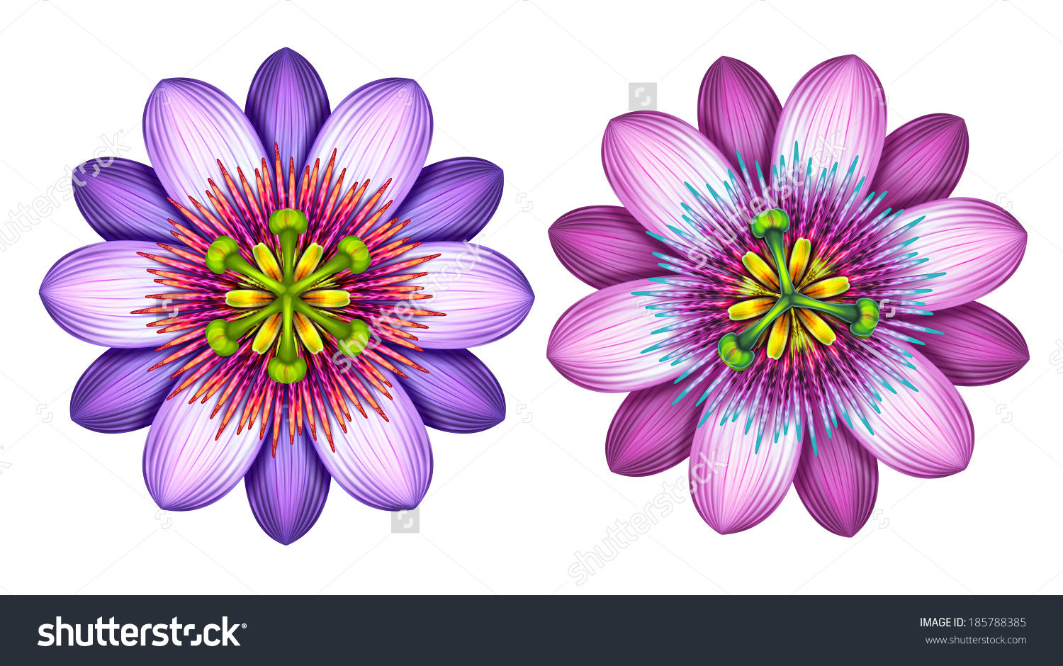 Abstract Exotic Passion Flowers Clip Art Stock Illustration.