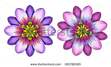 Flower Mandala Isolated On White Background Stock Photo 246894523.