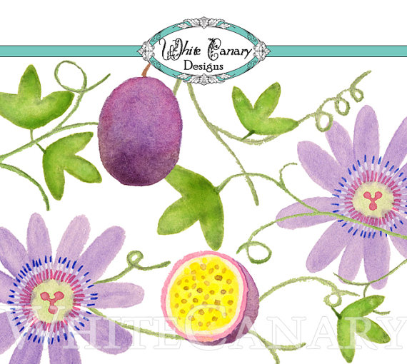 Passion Flower Clipart Watercolor Clipart by WhiteCanaryDesigns.
