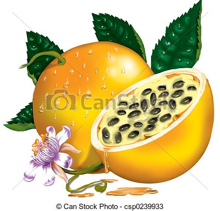 Passion fruit Clipart and Stock Illustrations. 1,086 Passion fruit.