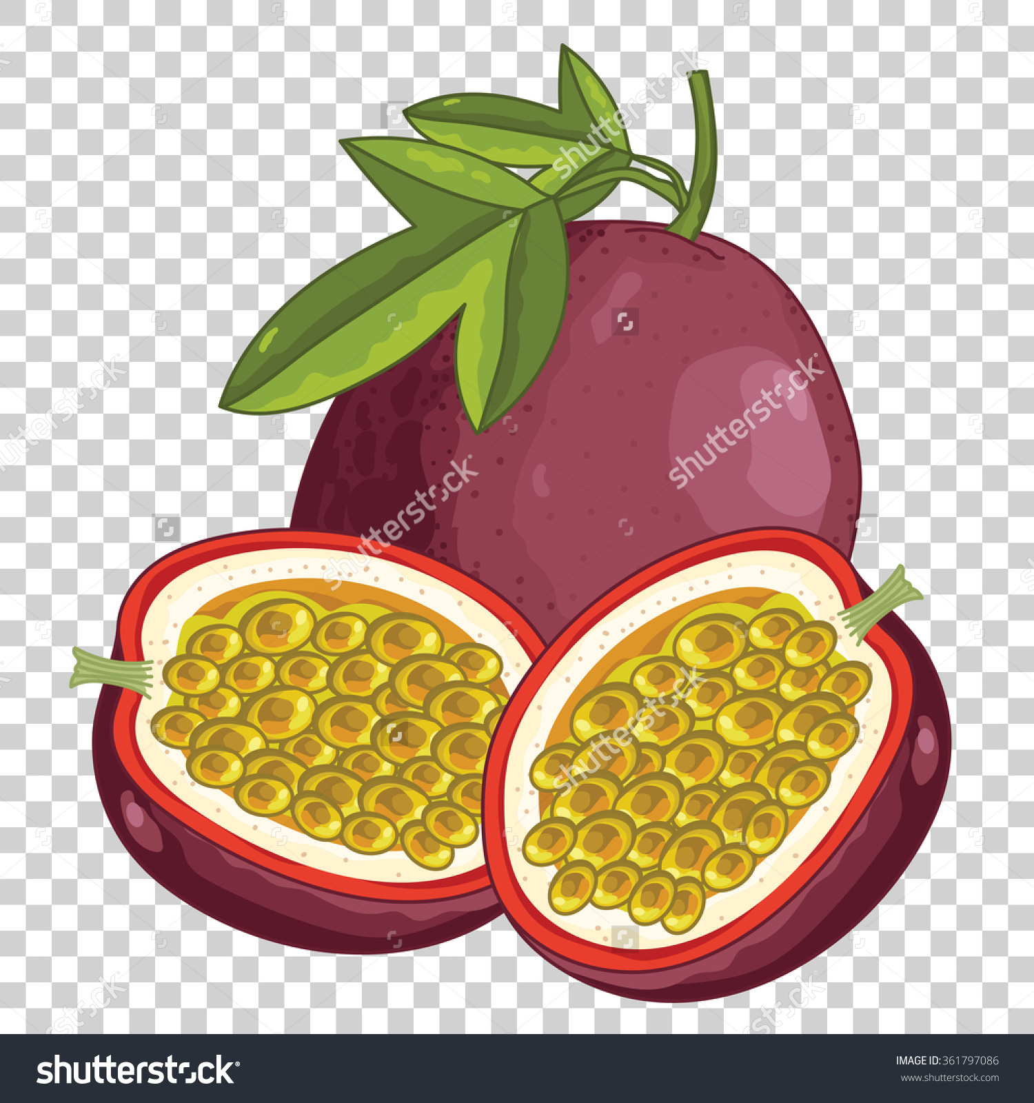Passion Fruit Vector Isolated On Transparent Stock Vector.