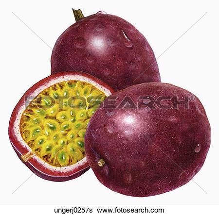 Passion fruit Illustrations and Stock Art. 247 passion fruit.