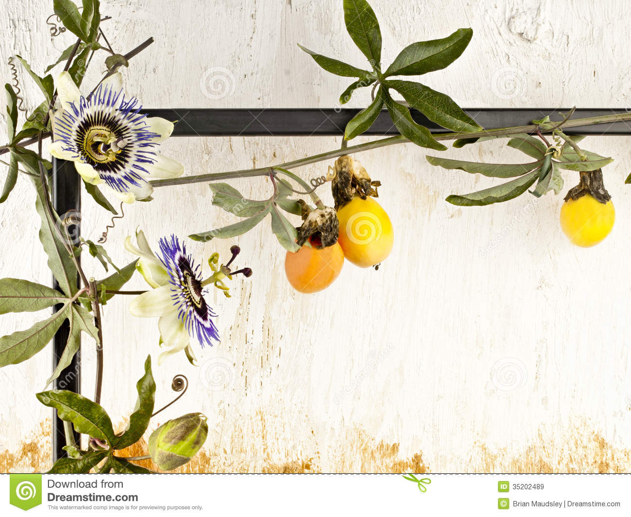 Passion Fruit Vine Stock Photos, Images, & Pictures.