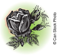 Passion vines Vector Clipart Illustrations. 129 Passion vines clip.