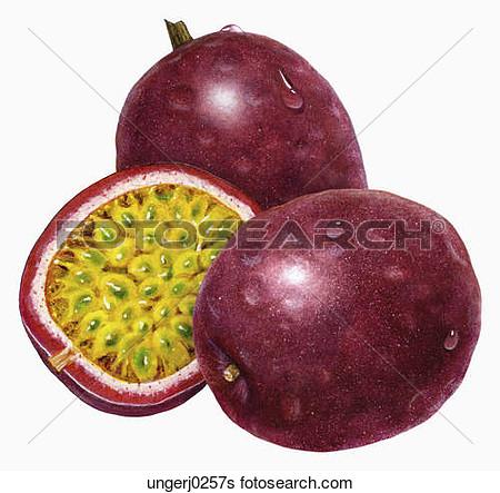 Similiar Passion Fruit Clip Art Keywords.