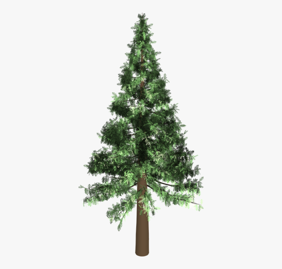 Arbol Pino Png , Free Transparent Clipart.