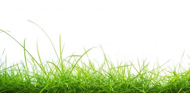 Grass Texture Vectors, Photos and PSD files.