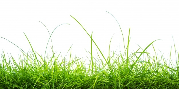 Grass Vectors, Photos and PSD files.