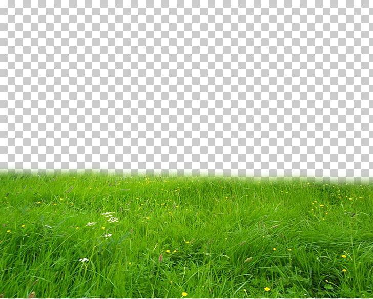 Pasto verde, edición de escritorio, pasto PNG Clipart.