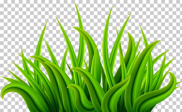 Grass Green PNG clipart.