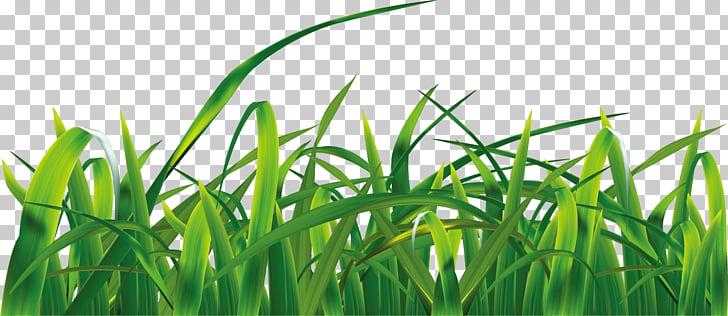 Pastos cielo euclidiano, pasto verde PNG Clipart.
