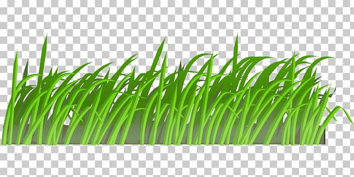 Pasto verde, cortacéspedes animación, pasto PNG Clipart.