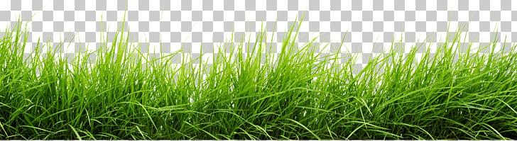Pasto verde, linea de pasto PNG Clipart.
