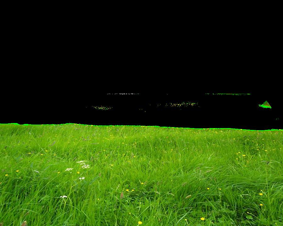 pasto verde plantitas freetoedit.