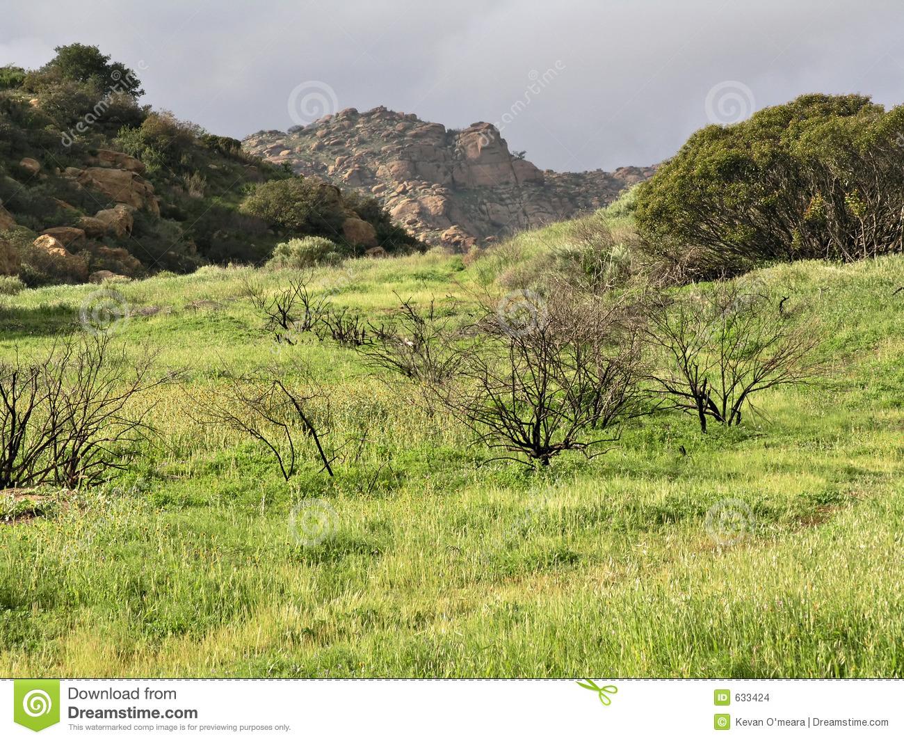 Green Grass Pastoral Scene Stock Images.