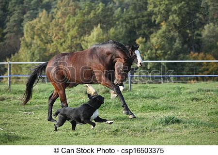 Picture of Two horses running on pasturage in autumn csp16503375.