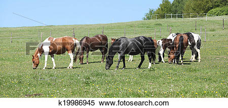 Stock Image of Very various batch of horses running on pasturage.