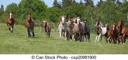 Stock Photography of Very various barch of horses running on.
