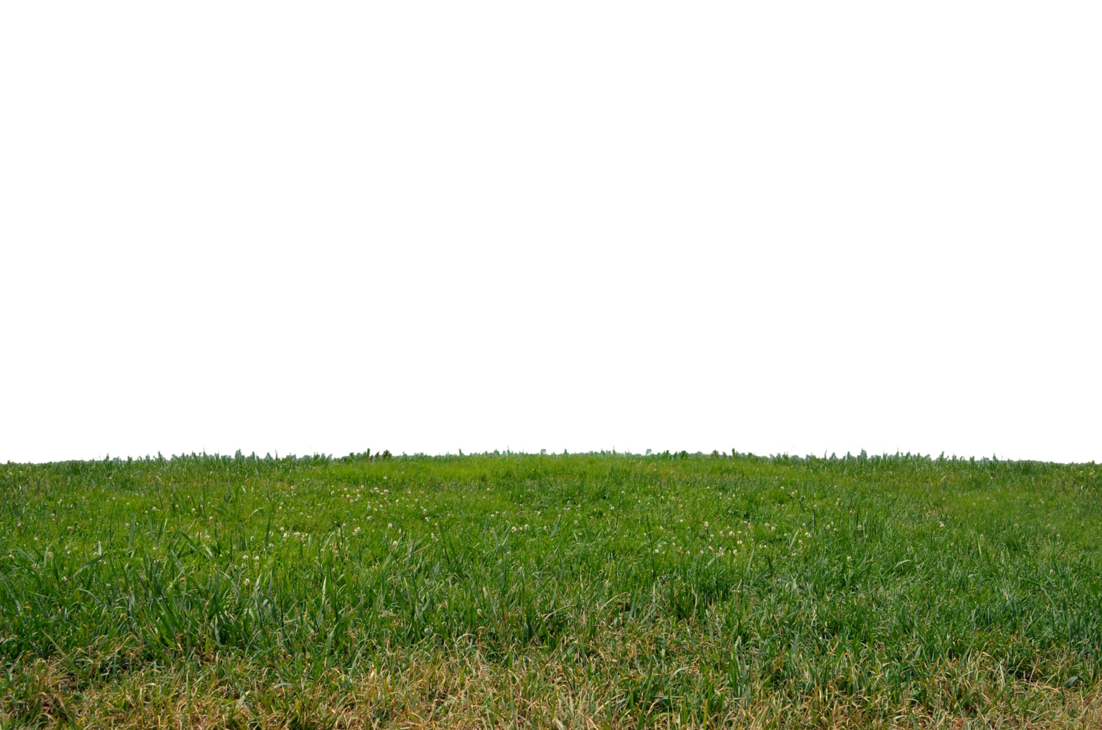 Download Grass PNG Clipart.