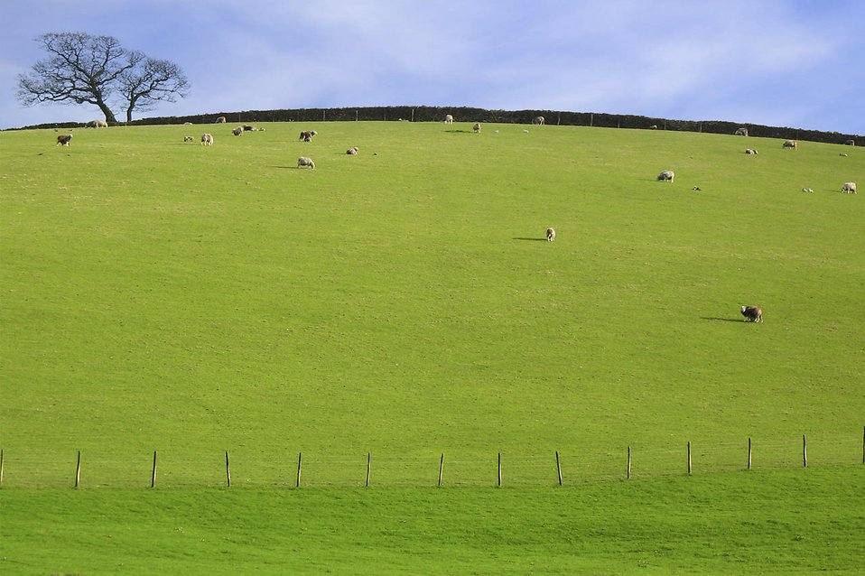 Pasture Clipart.