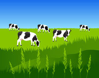 Milk Cows Pasture Land Stock Illustrations.